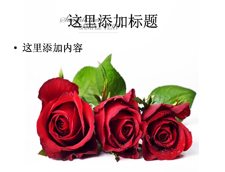 三朵红玫瑰图片ppt模板免费下载_113661- wps在线模板