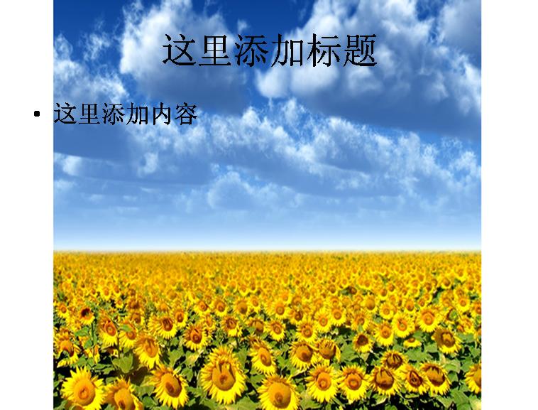 向日葵花海图片ppt模板免费下载_113847- wps在线模板