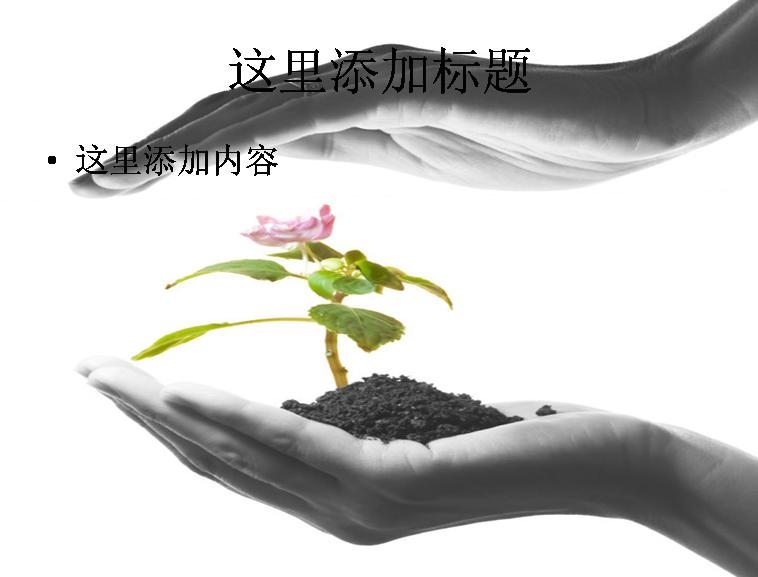呵护植物高清图片ppt-5植物素材;