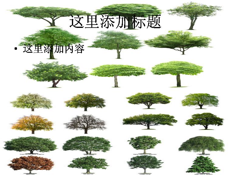 标  签: 植物花朵树林 支持格式: ppt wpp            209kb 作  者