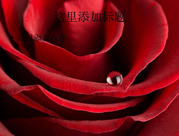 大红色玫瑰花特写图片ppt素材-4花卉图片ppt