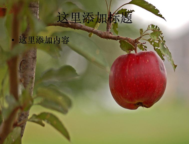 果树高清图片ppt模板
