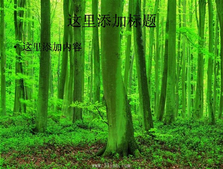 树木树林图片ppt模板