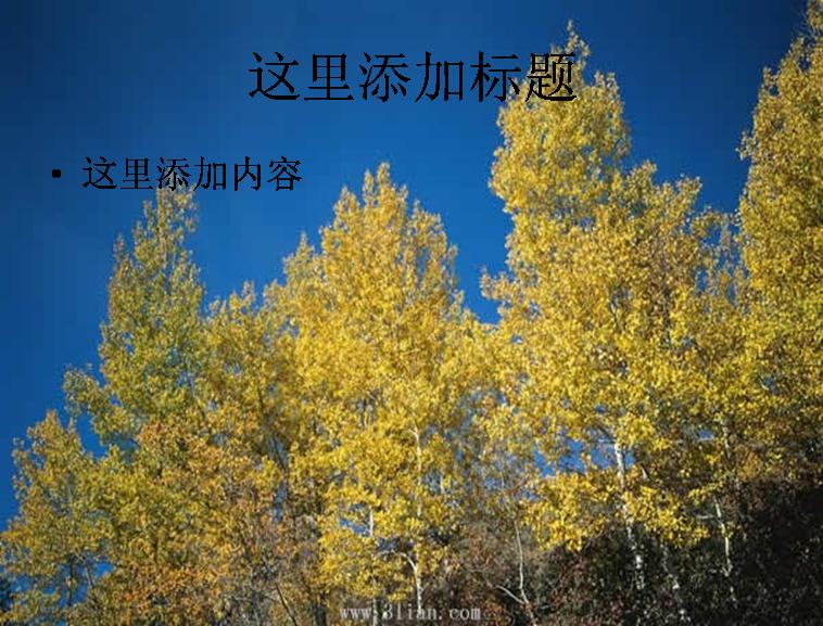 树林树木图片ppt