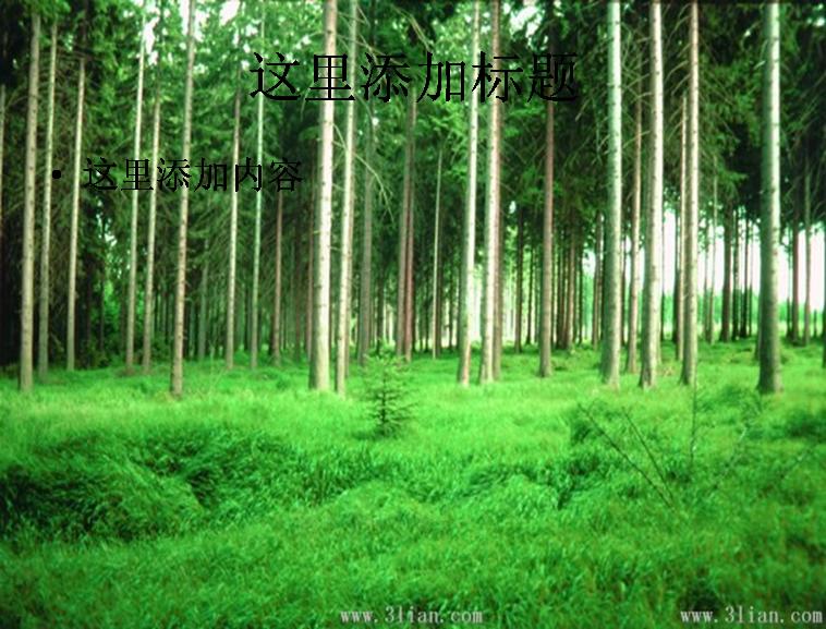 树林草地图片ppt