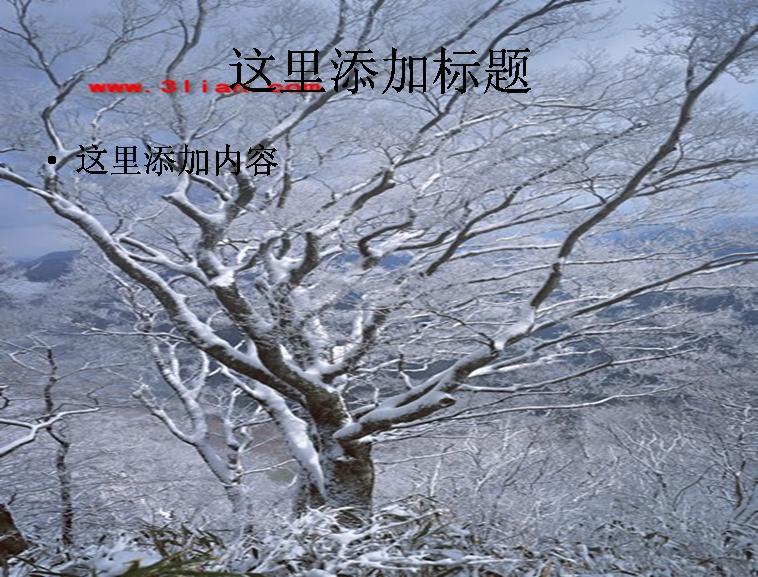 树林雪景图片ppt模板
