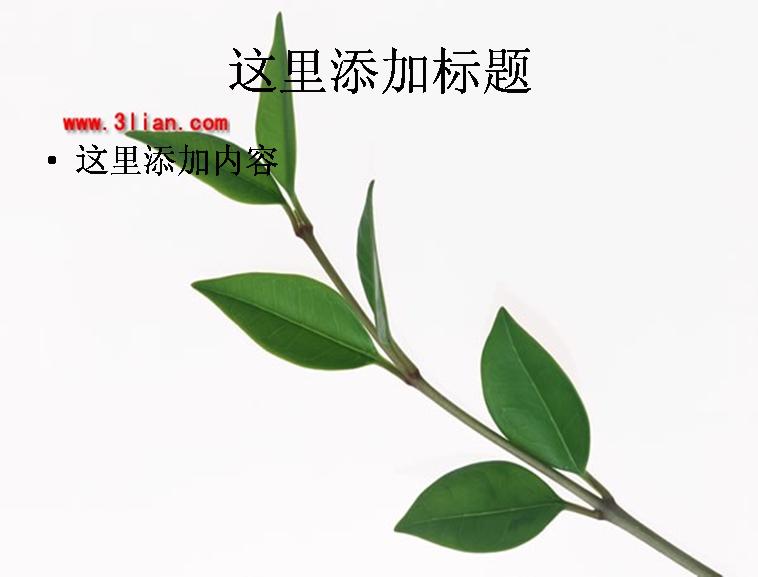 树枝绿叶图片ppt模板免费下载