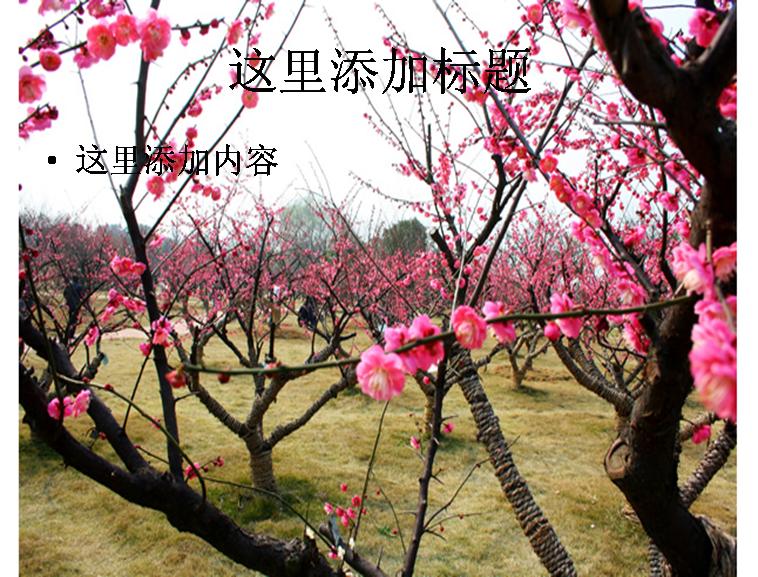 梅花园林图片ppt模板