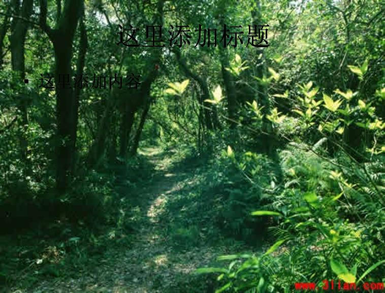 森林小径图片ppt模板