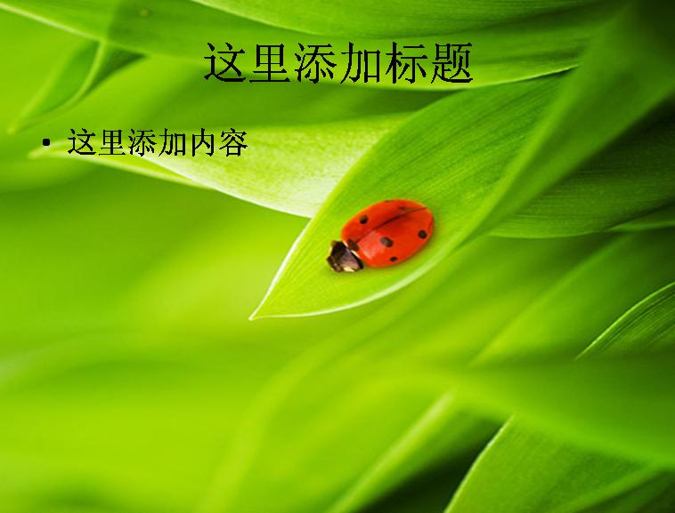 植物与瓢虫图片ppt素材模板免费下载_114766- wps在线
