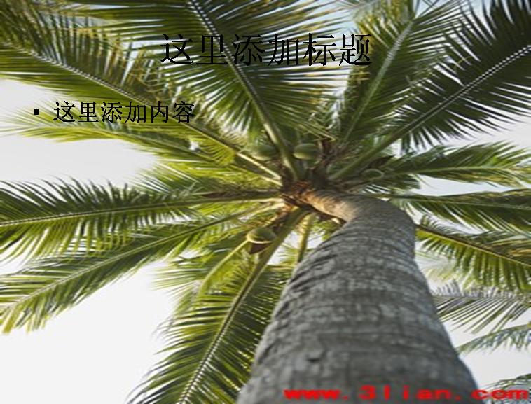 椰子树图片ppt模板免费下载