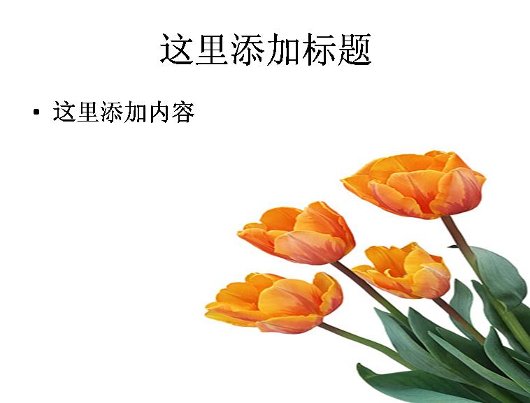 橙黄色郁金香图片ppt素材花卉图片ppt
