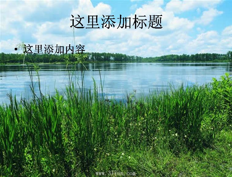 河边树木图片ppt