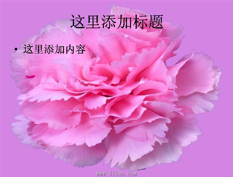 牡丹花图片ppt模板免费下载