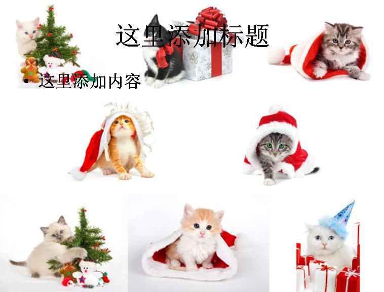 猫猫过圣诞高清图片ppt集植物素材 标  签: 可爱动物圣诞树礼物圣诞
