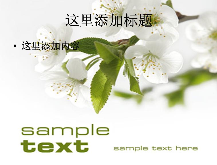 白色的花朵精品图片ppt素材花卉图片ppt模板