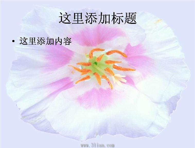 白色花瓣图片ppt模板免费下载