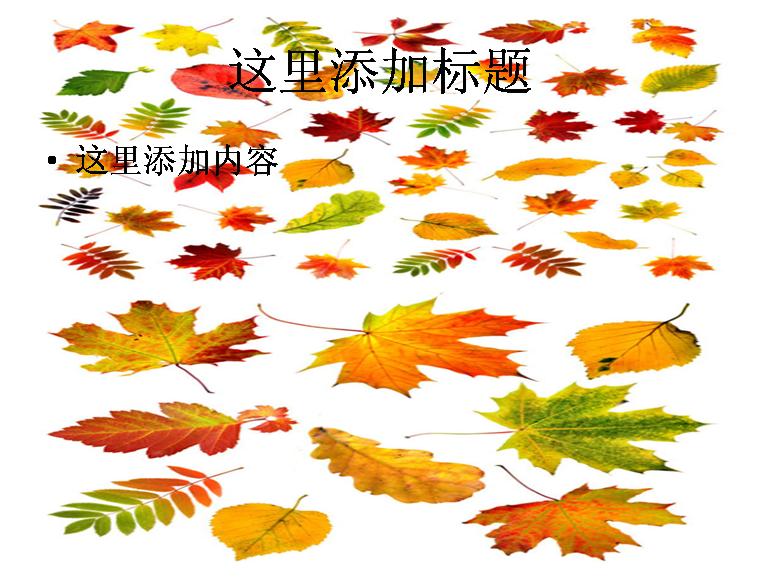秋天的树叶图片ppt