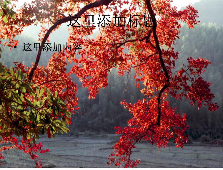 秋天红树叶图片ppt模板