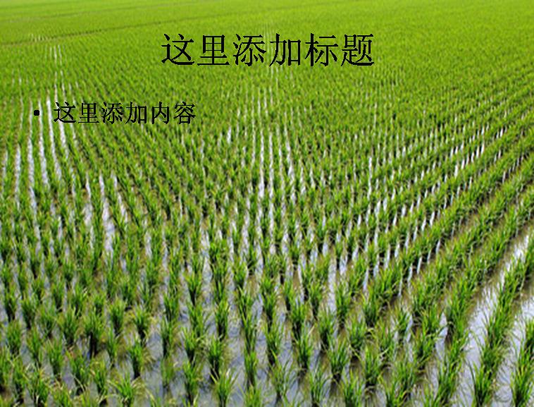 粮食系列图片ppt素材-3植物素材