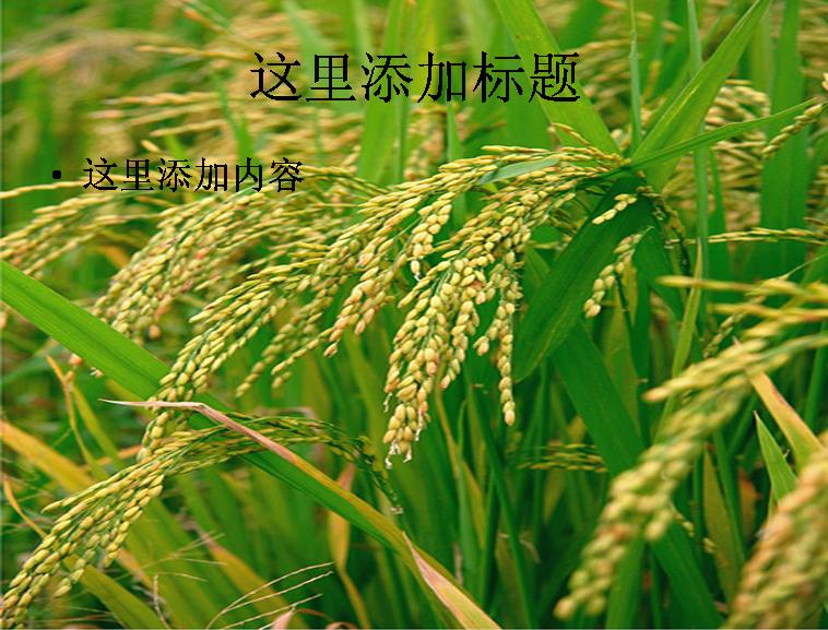 粮食系列图片ppt素材-5植物素材模板免费下载