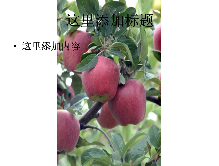 红富士苹果果树图片ppt模板免费下载_115457- wps在线