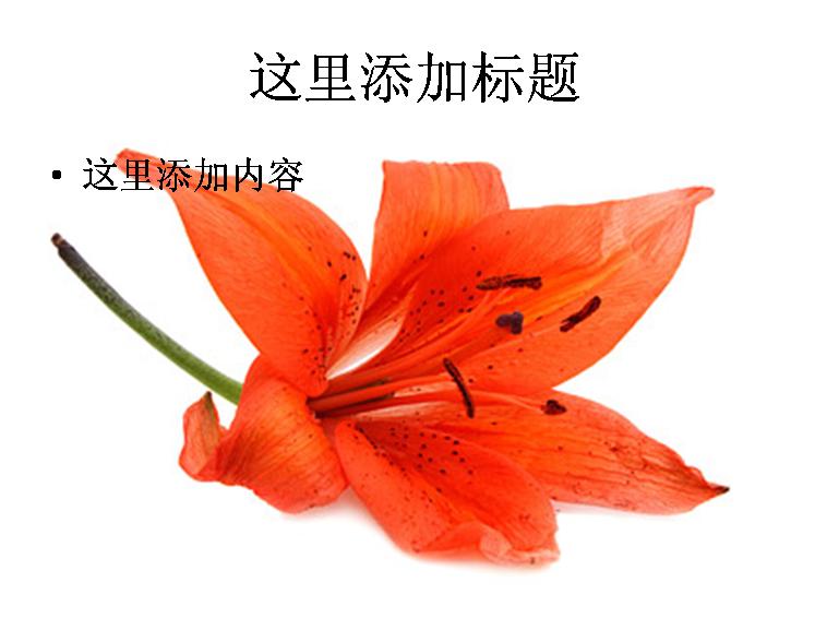 红色花朵图片ppt素材花卉图片ppt