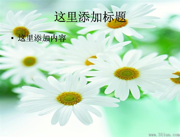 美丽插花花瓶图片ppt模板免费下载
