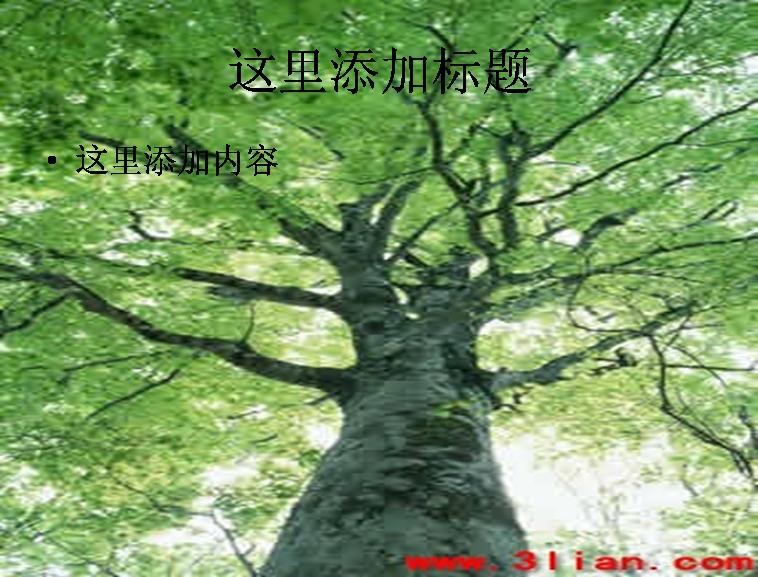 蒼天大樹圖片ppt模板免費下載