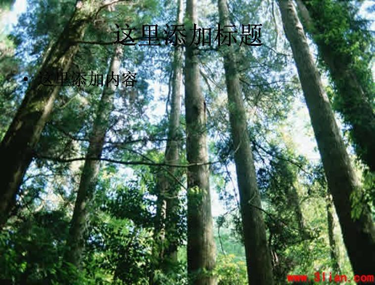 苍天树林图片ppt模板免费下载_115869- wps在线模板