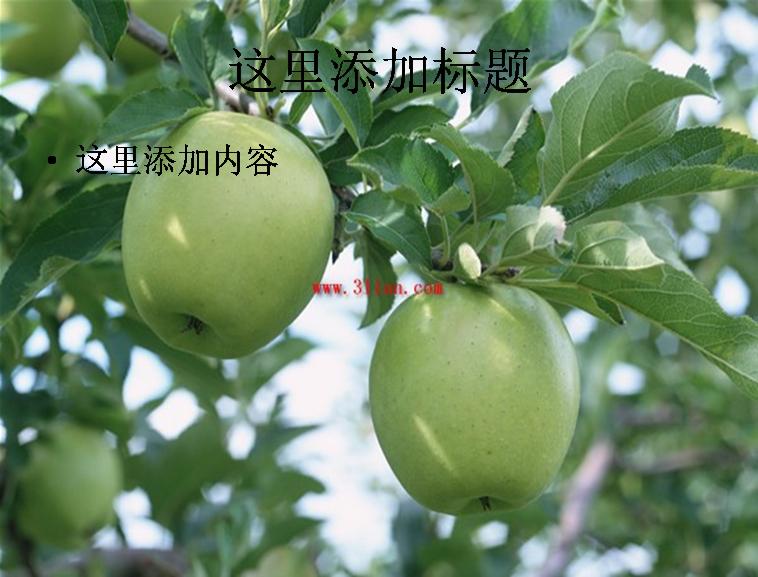 苹果,苹果树图片ppt
