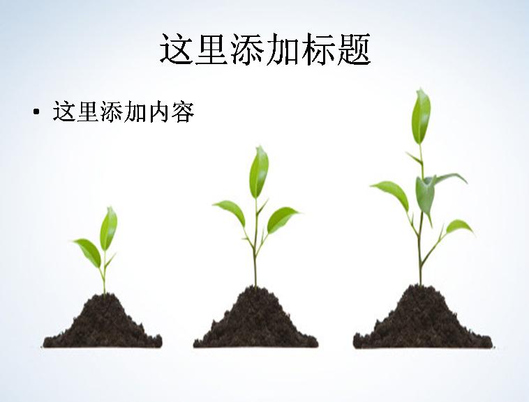 茁壮成长的树苗图片ppt素材植物素材