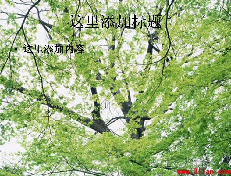 茂密树枝图片ppt模板免费下载