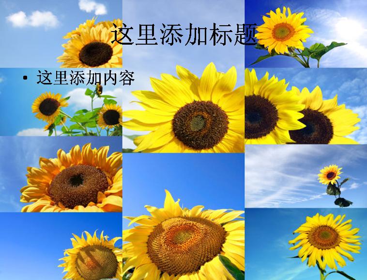 蓝天与向日葵图片ppt模板免费下载_116002- wps在线