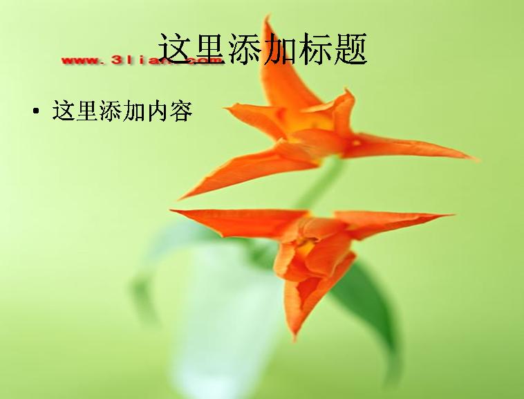 郁金香素材图片ppt 支持格式:ppt wpp 文件大小: