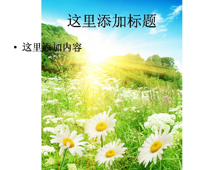 阳光菊花花海图片ppt模板免费下载_141704- wps在线