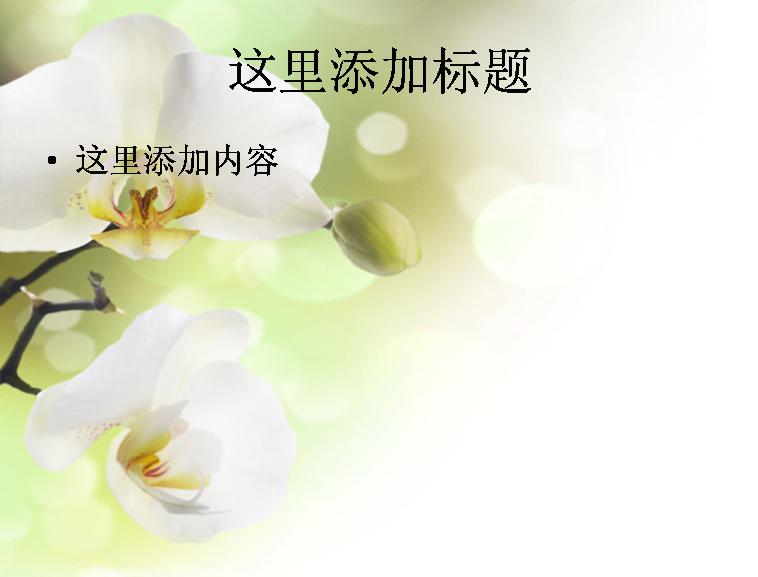 高清兰花图片ppt模板免费下载