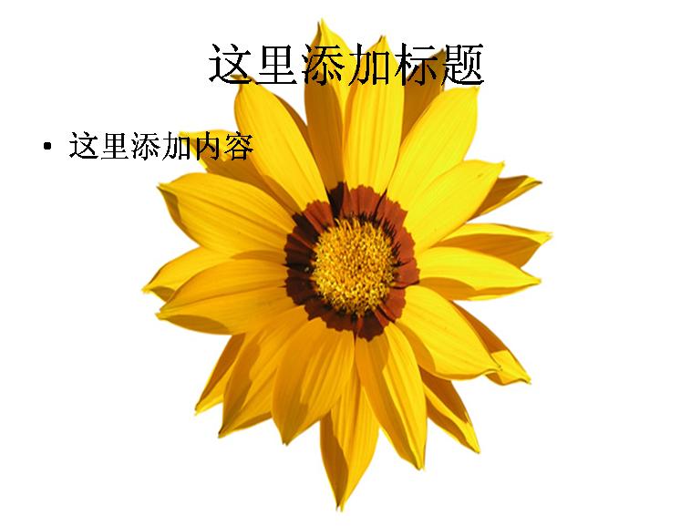黄色的花朵高清图片ppt模板