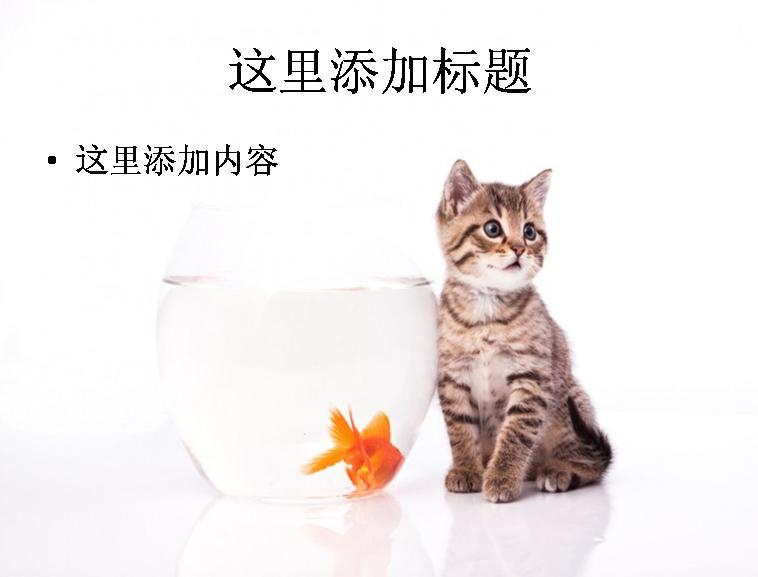ppt背景可爱小猫
