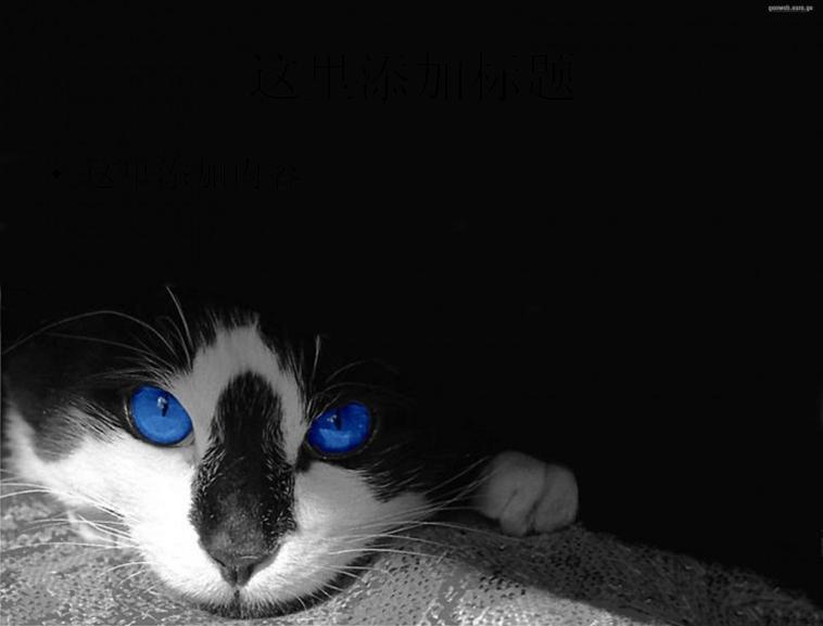 可爱猫咪第3辑第18张